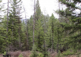 Land, For sale,  Haskill Ranch Road (Lot 29) , Listing ID 1069, Kila, Montana, United States, 59920,